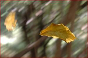 foglie-al-vento